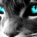 Les chats vous protègent et protègent votre maison des fantômes et des mauvais esprits