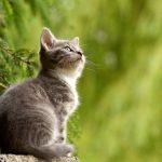 Voici l'animal qui a la capacité de guider votre âme