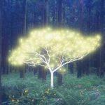 Comment utiliser l'énergie des arbres pour se soigner ?