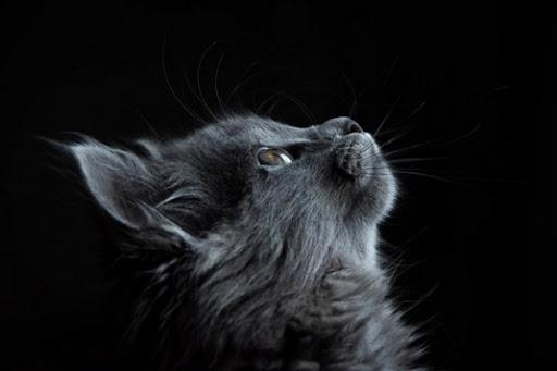 Plus que des animaux de compagnie, les chats ont un lien spirituel avec nous.