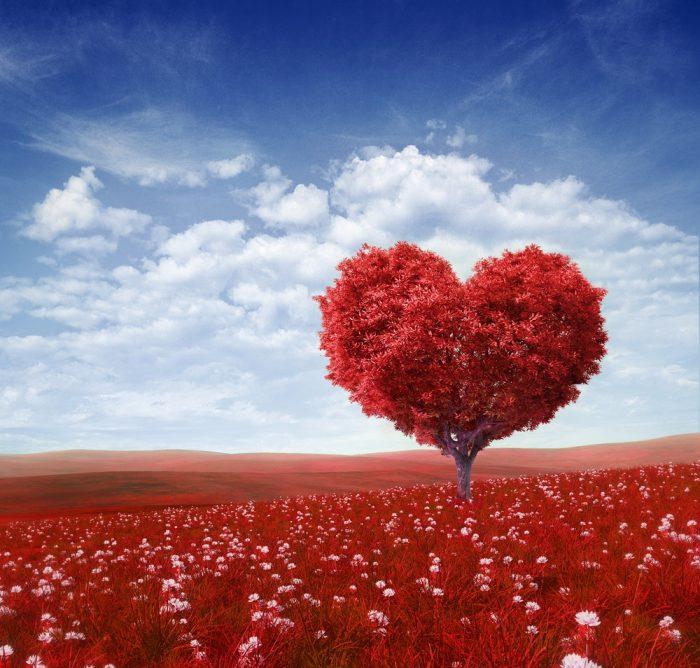 Les paroles d'amour soulagent nos cœurs et donnent de la lumière à nos vies !