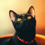 La sympathie naturelle des chats permet de guérir l'esprit, le corps et l'âme.