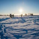 Le permafrost fait fondre d'anciennes formes de vie qui commencent à se réveiller