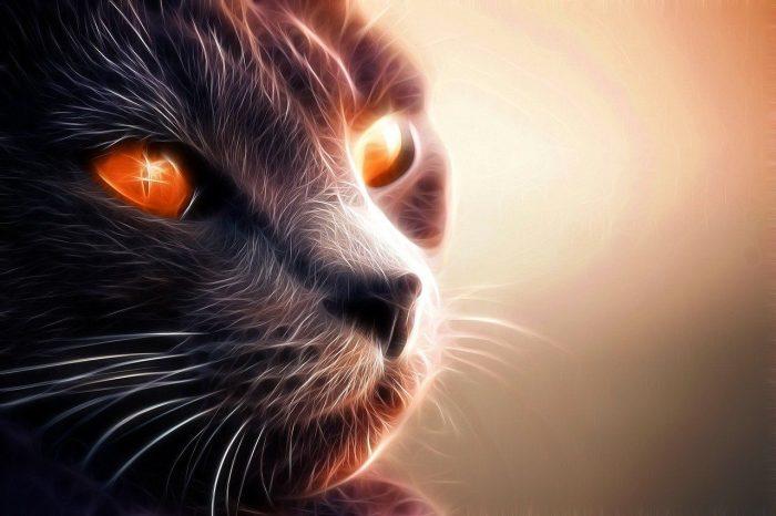 Saviez-vous que les chats sont d'excellents protecteurs de la maison contre les esprits et les énergies négatifs?